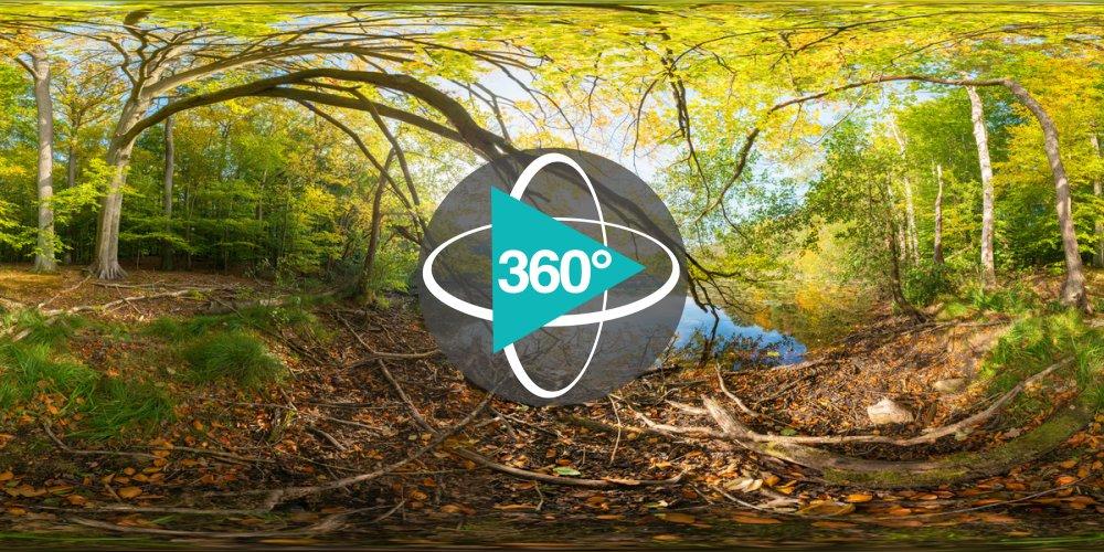 Play '360° - UNESCO Weltnaturerbe Grumsiner Forst