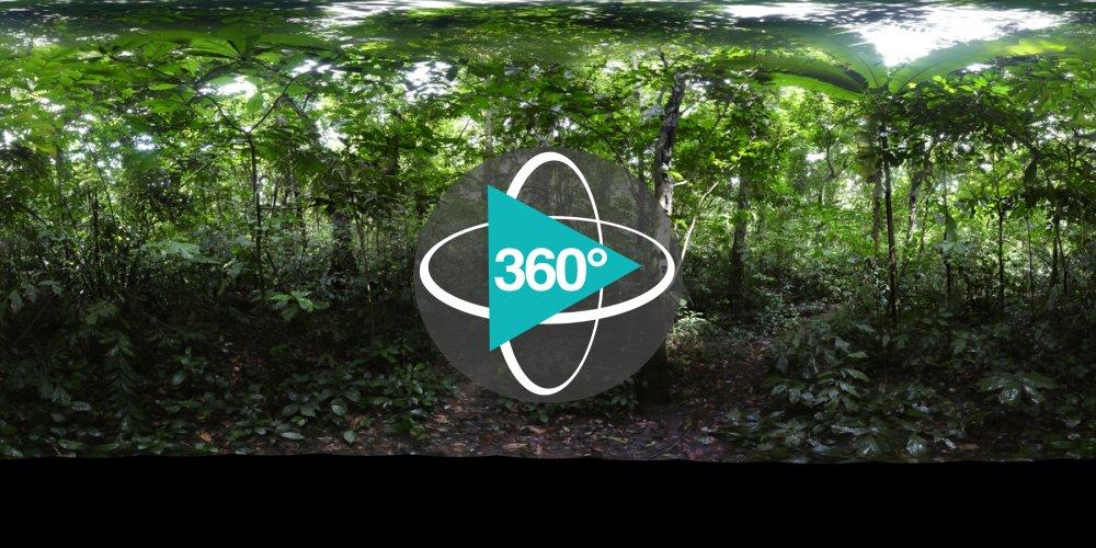 Play '360° - Vietnam_marteloscope_2018