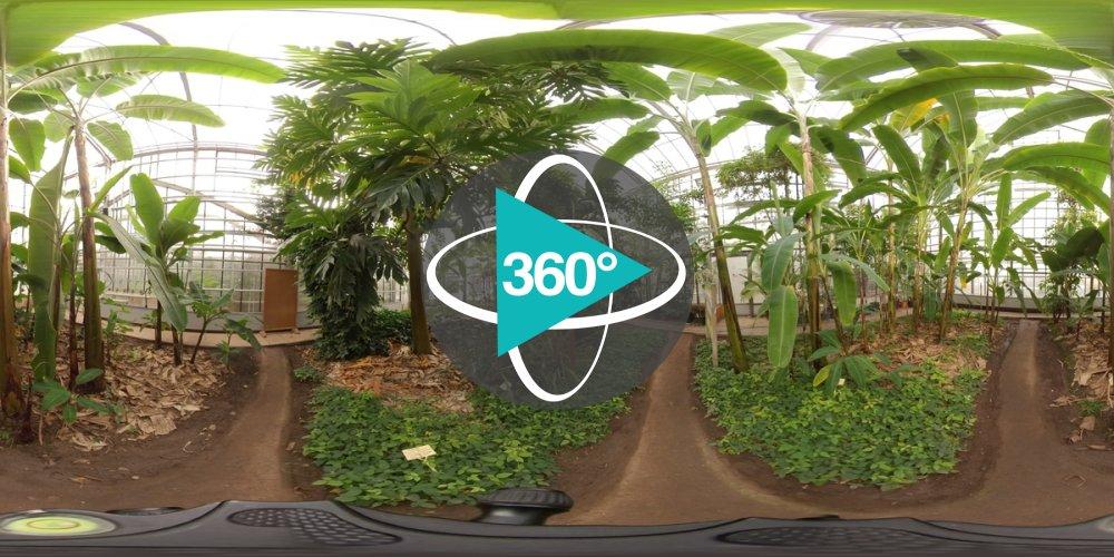 Play '360° - Witzenhausen Tropengewächshaus